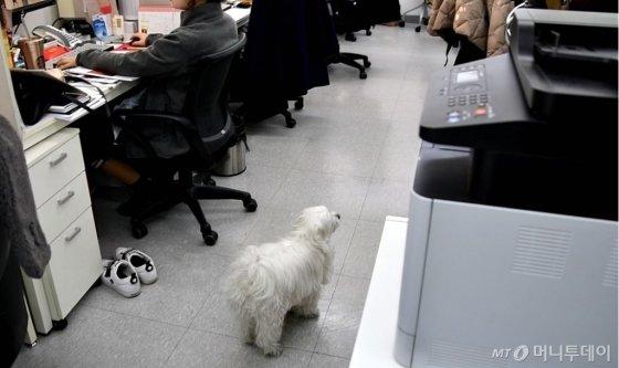 5층 사무실에서 일하는 설대리의 모습. /사진=김소영 인턴기자