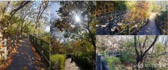 안산자락길은 누구나 쉽게 산책할 수 있도록 보행하기 힘든 길은 나무데크로 길을 만들고, 자연스럽게 나 있는 길은 나무와 숲을 그대로 살린 흙길 등으로 등산객을 맞고 있다.(사진 중앙은 일반 자연상태의 보행로, 나머지는 나무데크로 만든 길이다)./사진=오동희 기자