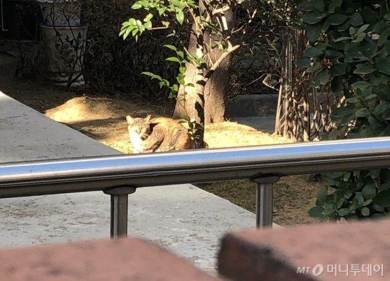아파트단지와 주택가 등 도시 어느 곳에서나 길고양이를 쉽게 볼 수 있다. 사진은 서울 강동구 암사동에서 발견한 길고양이의 모습. /사진= 유승목 기자