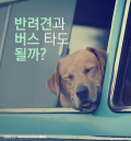 [카드뉴스] 반려견과 버스 타도 될까?