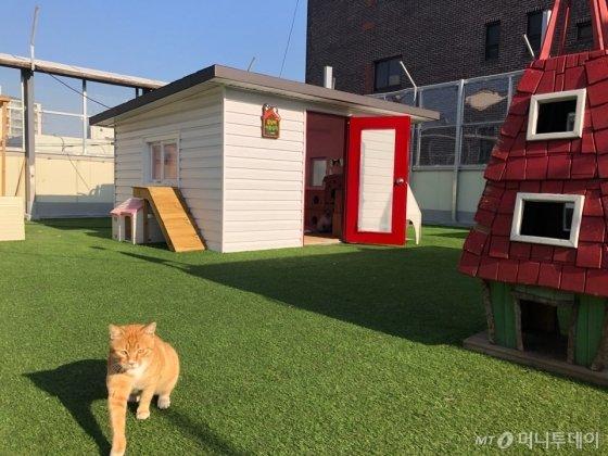 지난 19일 찾은 서울 강동구 성내동 유기동물구조·분양 시설인 '리본센터' 옥상으로 이전한 '어울쉼터'의 모습. 18마리의 고양이가 머물고 있다. /사진= 유승목 기자