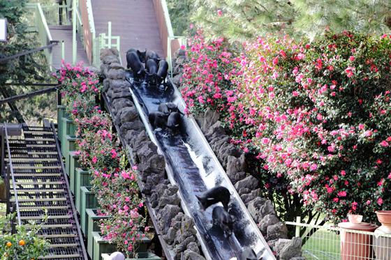 제주 휴애리자연생활농원에서 미끄럼틀 타고 내려오는 아기 돼지./사진제공=한국관광공사