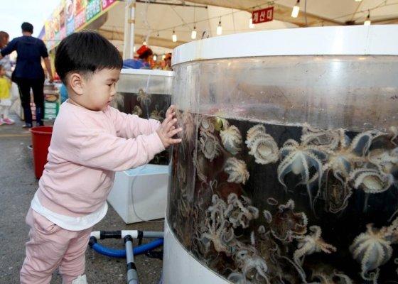몽산포항 주꾸미 수산물 축제에서 주꾸미를 보는 아이/사진제공=태안군청