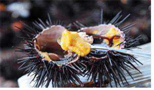 풍미 깊은 성게요리/사진제공=해양수산부