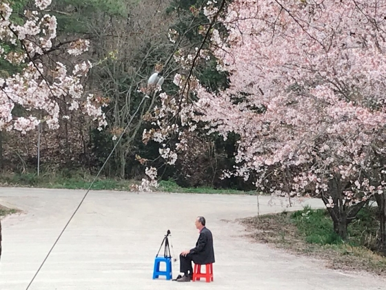 박일환 전 대법관(68)이 만발한 벚꽃나무 아래서 영상을 촬영하고 있다. 단정히 차려입은 노신사 위로 흩날리는 벚꽃이 낭만적이다. /사진제공=박일환 전 대법관