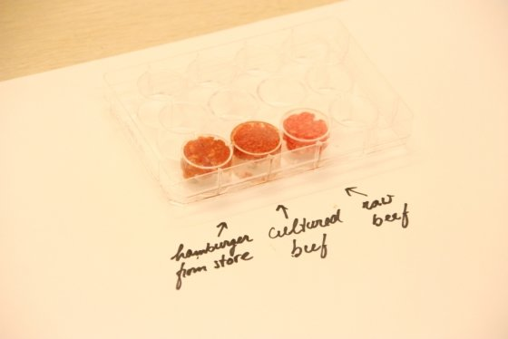2013년 네덜란드 마스트리흐트대학의 마크 포스트 교수가 최초로 소 배양육을 만들었다. 실제 시판되는 햄버거 패티와 생 소고기, 배양육을 나란히 놓고 비교하는 모습. /사진=AFP