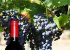 백조씽크 이종욱 사장의 와인 '호주 국가문화유산'