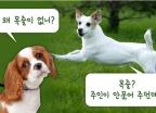 [e런 세상]개한테 물린 딸…父 분노케 한 주인의 '한마디'