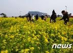 [사진]봄기운 가득한 서귀포