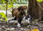 대만, 개·고양이 식용금지법 승인…한국은?