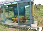 [사진]폭염 진풍경...버스정류장서 더위 피하는 소