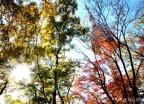 오색 빛 향연…전국 단풍 절정 시기는?
