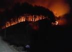울산 산불 12시간만에 진화… 산림 5ha 소실