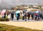 봄비에 줄지어 선 우산