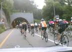 [빨간날]'떼빙'에 '자라니'도 불쑥…자전거, 도로의 '문제아'?