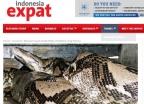 인도네시아 50대 여성, 비단뱀 뱃속서 숨진 채 발견