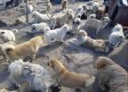 버려진 250마리 강아지·고양이…22만 청원이 살렸다