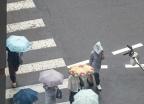 [내일 날씨]불볕더위 속 소나기…서울 낮 36도