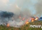 폭염에 '여름 산불'도 늘었다