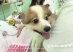 [MUFFLER] 댕댕이의 목욕 : #대중목욕탕 #강아지 스파