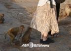 젖 먹던 갓난아기 낚아채 살해…'인도 원숭이' 주의보