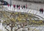 """[내일 날씨]전국 맑은 날씨…큰 일교차로 """"감기 조심하세요"""""""