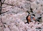 '춘분'이 공휴일인 일본… 증시도 휴장