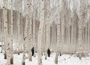 [이호준의 길위의 편지] 자작나무 숲에서 겨울을 전송한다
