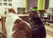 """[꿀빵]""""나도 명절 스트레스 받는다옹!""""… 고양이 모시는 꿀팁"""
