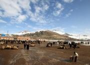 [이호준의 길위의 편지]쿠르드족 가축시장에서 만난 사람들
