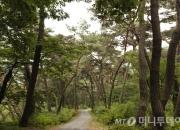 [이호준의 길위의 편지]봉곡사 소나무 숲길에 가면