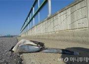 새들의 재앙 '윈도 킬'…매년 800만마리가 죽는다