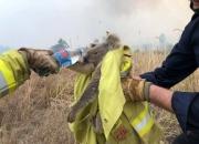 '불탄 캥거루' 사진 한 장의 충격…'호주 산불' 전 세계가 나섰다