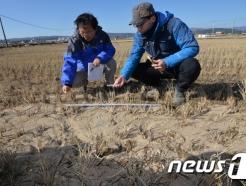 포항 지진 후 '액상화 현상'
