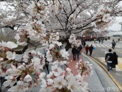 벚꽃과 함께 봄나들이