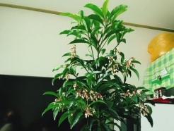 [MT리포트]집안에 꽃피니…얼굴도 시장도 활짝 피네