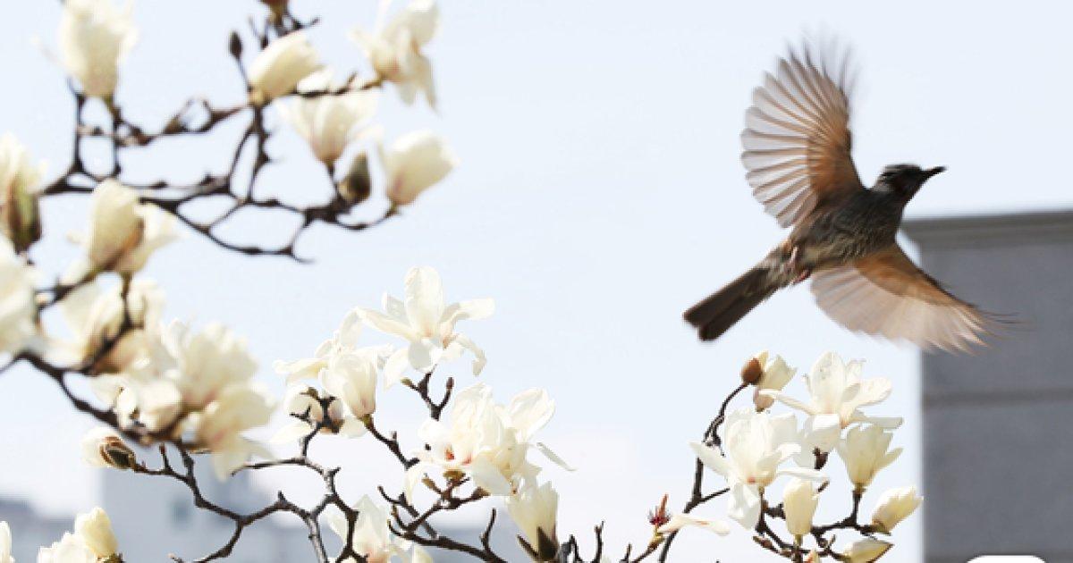 [17일 날씨] 화창한 봄…일교차 10도 이상 '조심'