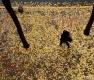 낙엽비 내린 정동길