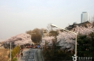 걷자 꽃<strong>길</strong>위-맡자 봄내음…봄꽃축제로 전국이 들썩