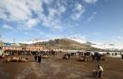 쿠르드족 가축시장에서 만난 사람들