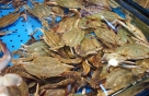 [바다정보다잇다] 꽃게 암수 구별은 배…꽃게 효능과 손질법