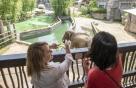 에버랜드, 세계 최고 동물원 반열에…亞 최초 AZA 인증