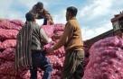 인도의 '양파' 수입이 뉴스가 된 이유는?