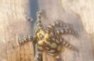 여수 앞바다서 '파란고리문어' 발견…청산가리 10배 독성