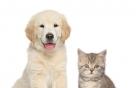 사람이 개·고양이에게 코로나19 옮긴다