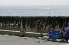 미역·톳 양식어가도 어민 재난지원금 100만원씩 받는다