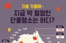 [그래픽뉴스]가을가을해~ 지금 딱 절정인 단풍명소는 어디?