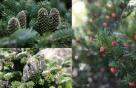 네파, '구상나무 등 멸종위기 고산침엽수 살리기'에 후원