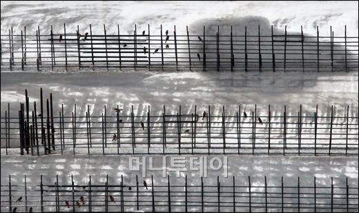 [사진]8월 이달의보도사진상 '짹짹짹! 음표가 된 참새'