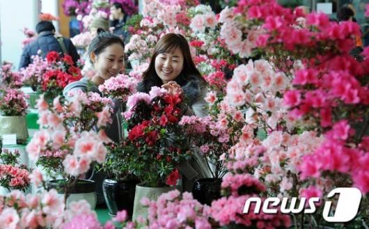 """[사진]철쭉이 전하는 화사한 """"봄 소식"""""""